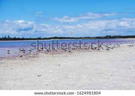 Wildlife on the shoreline of a lake #1624981804