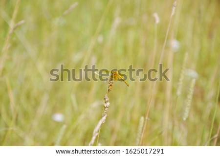 blurred background with greenery and dragonfly #1625017291