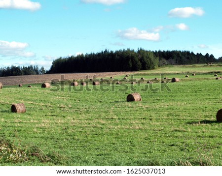 Round hay bales in a hay field #1625037013