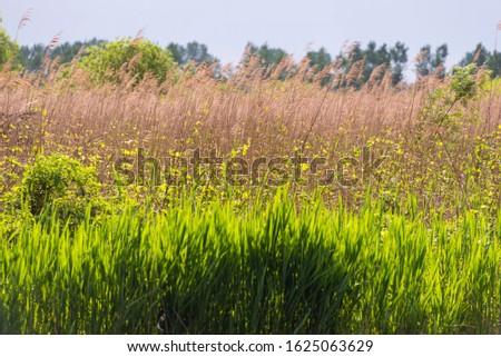nature sceneries inside the Mincio Regional Park, Mantua #1625063629