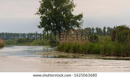nature sceneries inside the Mincio Regional Park, Mantua #1625063680