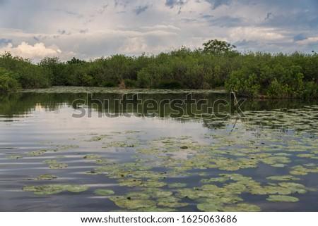 nature sceneries inside the Mincio Regional Park, Mantua #1625063686