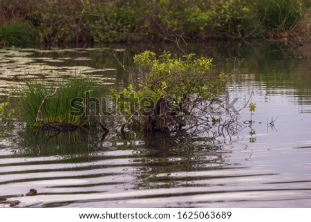 nature sceneries inside the Mincio Regional Park, Mantua #1625063689