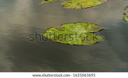 nature sceneries inside the Mincio Regional Park, Mantua #1625063695