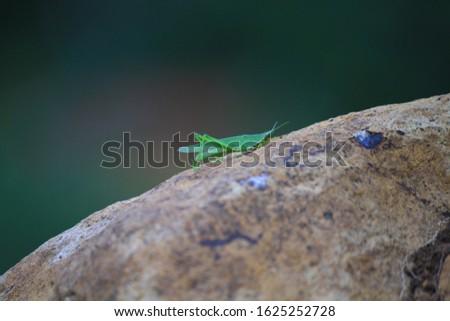 Image of praying mantis  is climbing a rock #1625252728