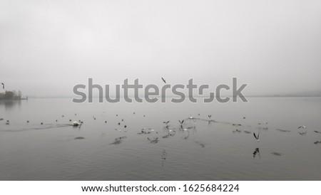 ioannina lake winter scene wildlife nature animals doves birds white ducks Swans Swimming in lake pamvotida of the city of ioannina epirus