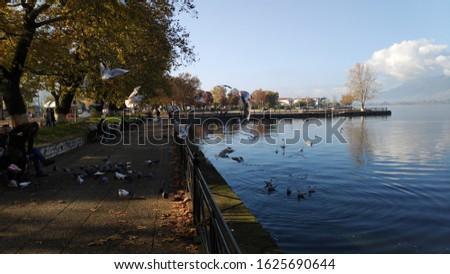 ioannina lake wildlife nature animals doves birds winter scene in lake pamvotida of the city of ioannina epirus