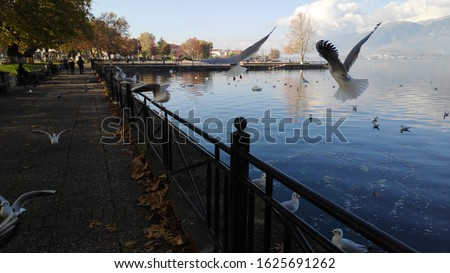 ioannina lake wildlife nature animals doves birds flying winter scene in lake pamvotida of the city of ioannina epirus