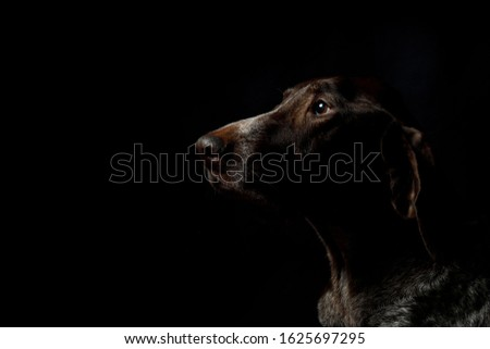 Profile of a dog breed pointers on a black background. #1625697295