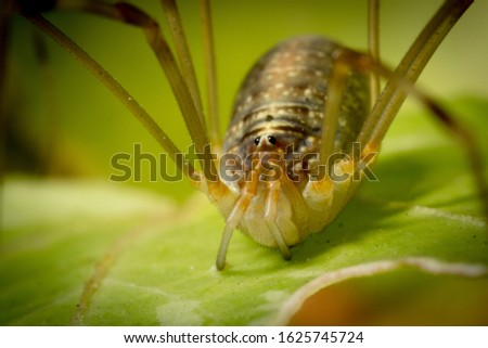 Macro image of a spider #1625745724