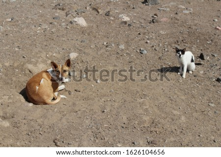 DOMESTIC ANIMALS - Dog and cat lying on the ground #1626104656