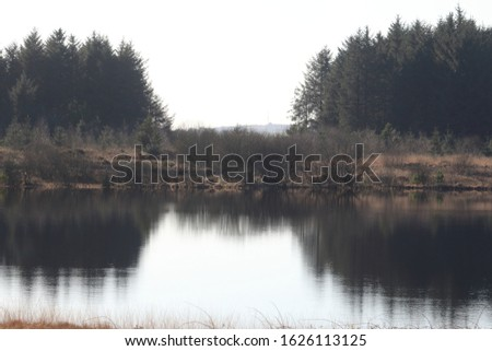 The reflection of conifer trees in the lake at Llyn Llech Owain Country Park near Crosshands,Carmarthenshire, Wales, UK. #1626113125