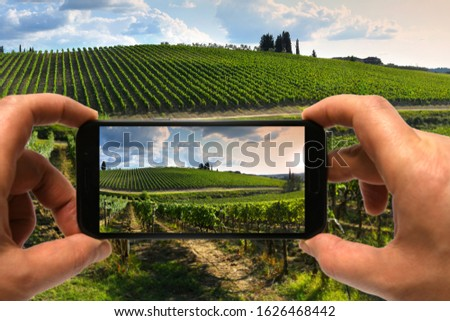 man hands use smartphone to take a photo. beautiful Tuscan vineyards in the summer season. Italy