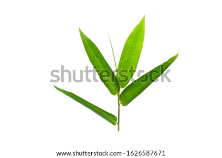 Bamboo leaf isolated on white background, Bamboo leaf texture as background or wallpaper, Chinese bamboo leaf, Collection or set of green bamboo leaves #1626587671