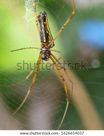 A black and yellow color spider is photographed close up, macro picture with spider web and natural background