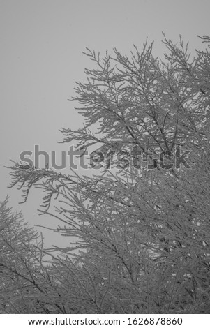 fairytale picture in a frozen forest
