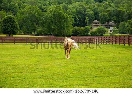 Beautiful Palomino Horse Approaching Us From the Meadow #1626989140