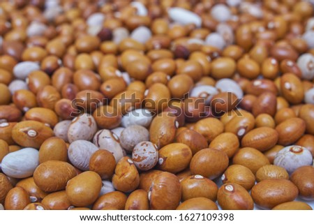 Background of many grains of dried beans. Beans of bean (beans).Brown beans texture. Food background. Close up. #1627109398