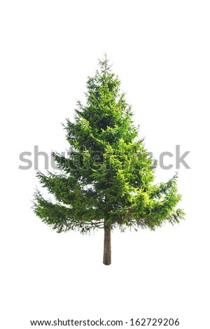 green fir isolated on white #162729206