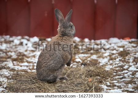 Little funny rabbit running on the field in winter  Royalty-Free Stock Photo #1627393333