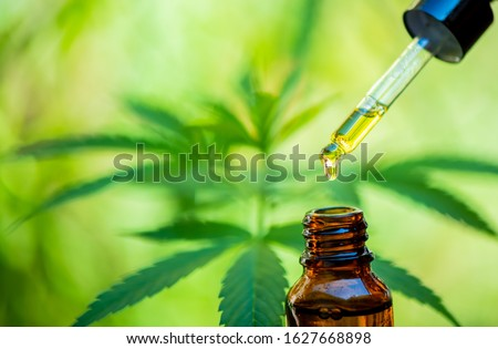 CBD hemp oil, drip, bio-medicine and ecology, hemp plant, herb, medicine, cbd oil from medical extraction Royalty-Free Stock Photo #1627668898