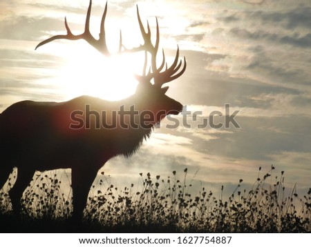 magnificent majestic sun rise elk  #1627754887