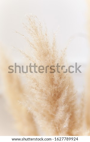 Macro photography of flowers and plants, yellow ears of rye and wheat on a white background, dried flowers for home decor, 8 march, selective focus