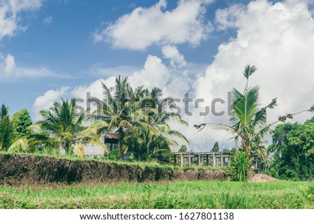 Rice paddy field close up in Ubud, Bali, Indonesia, Southeast Asia, Asia #1627801138