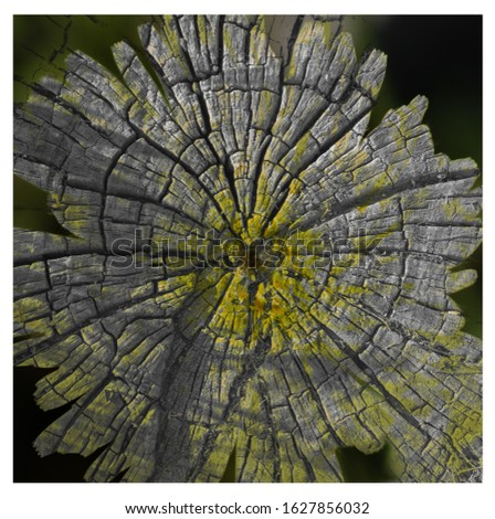 This is the picture of a tree trunk and the picture of a flower merged together to look like one.