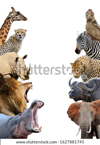 Group of African safari animals together isolated on white background #1627881745