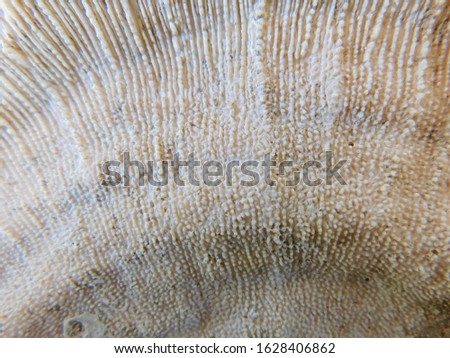 Coral surface Rough surface Coral background #1628406862