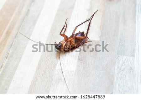 one creepy cockroach dead on floor with insecticide killing #1628447869