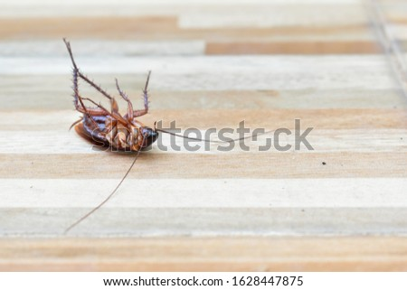 one creepy cockroach dead on floor with insecticide killing #1628447875