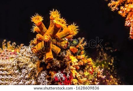 Underwater life macro scene view. Underwater world #1628609836