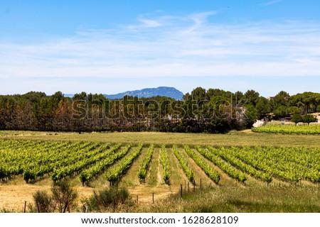 Vineyard of Teyran dominated by the Pic Saint-Loup