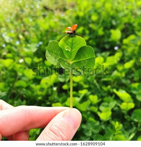 Four-leaf clover with a ladybug. Lucky charm. #1628909104