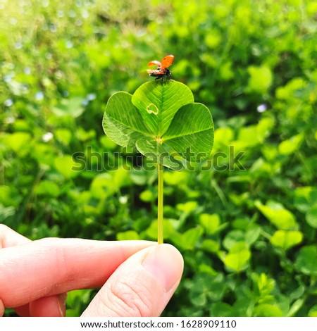 Four-leaf clover with a ladybug. Lucky charm. #1628909110