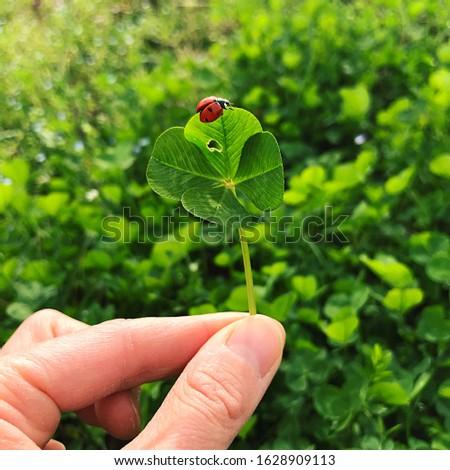 Four-leaf clover with a ladybug. Lucky charm. #1628909113