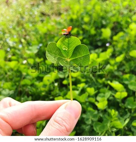 Four-leaf clover with a ladybug. Lucky charm. #1628909116