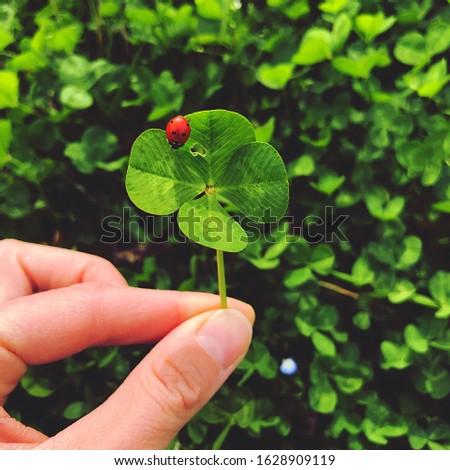 Four-leaf clover with a ladybug. Lucky charm. #1628909119