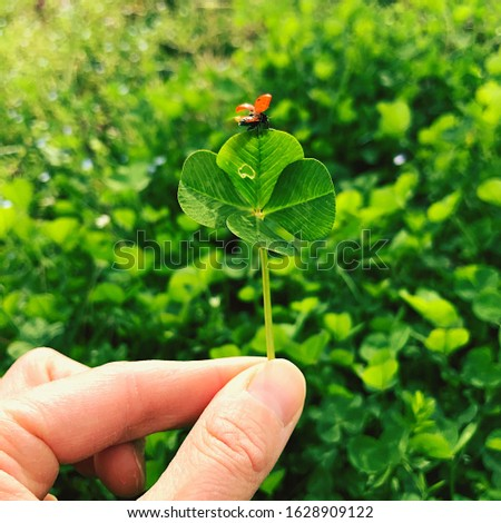 Four-leaf clover with a ladybug. Lucky charm. #1628909122