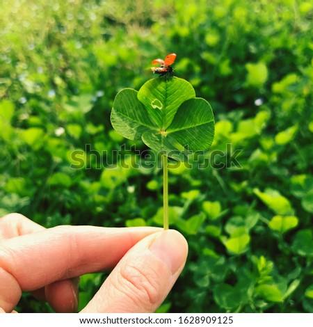 Four-leaf clover with a ladybug. Lucky charm. #1628909125