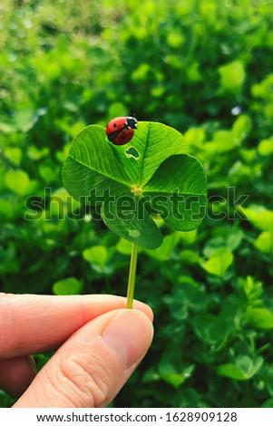 Four-leaf clover with a ladybug. Lucky charm. #1628909128