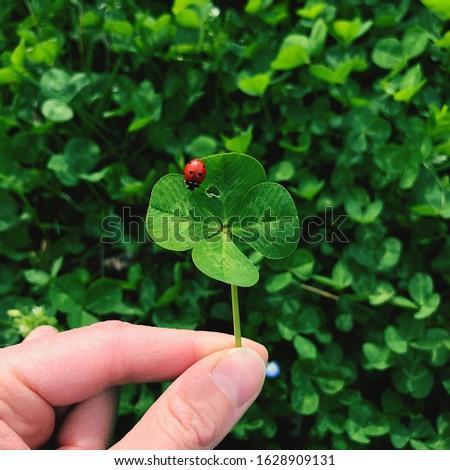 Four-leaf clover with a ladybug. Lucky charm. #1628909131