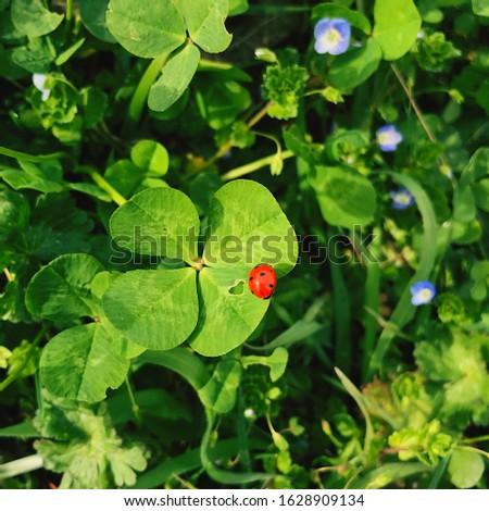 Four-leaf clover with a ladybug. Lucky charm. #1628909134