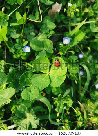 Four-leaf clover with a ladybug. Lucky charm. #1628909137