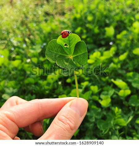 Four-leaf clover with a ladybug. Lucky charm. #1628909140