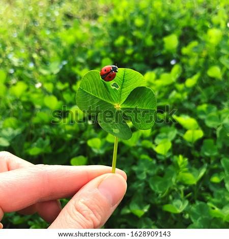Four-leaf clover with a ladybug. Lucky charm. #1628909143