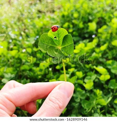 Four-leaf clover with a ladybug. Lucky charm. #1628909146
