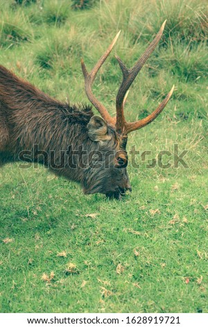 Moose in Horton Plains. Horton plains #1628919721